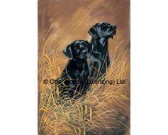 Black Labradors Pair Flag (Painting)