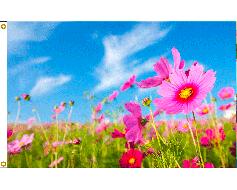 Spring Flowers Flag - 3x5'