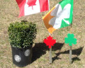Canadian maple leaf holder in the ground