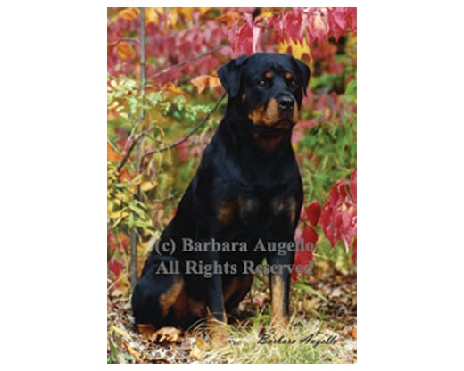 Rottweiler Flag (Photo)