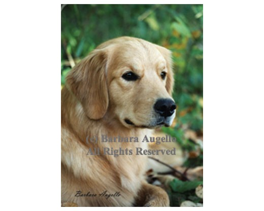 Golden Retriever Flag (Photo)