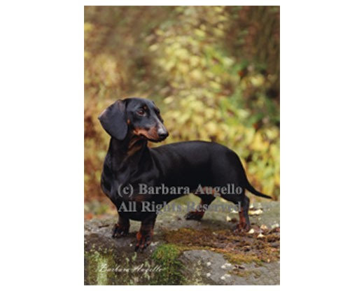 Dachshund (Black/Tan) Flag