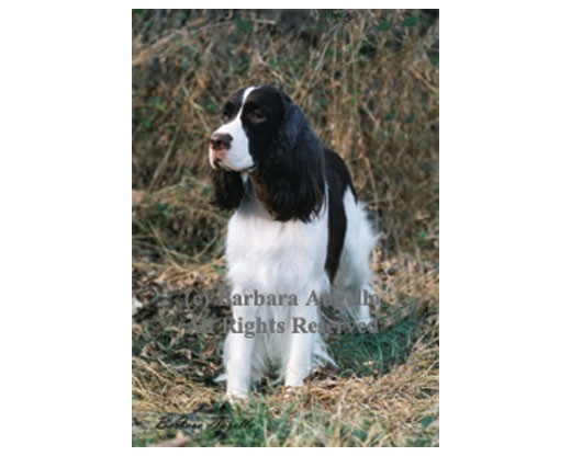 English Springer Spaniel Flag