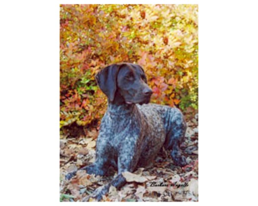 German Shorthair Flag