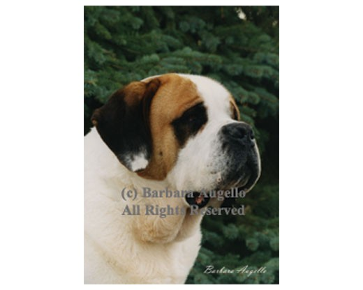 Saint Bernard Flag