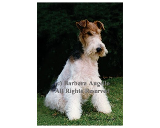Wire Fox Terrier Flag