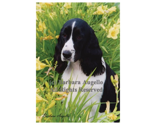 English Springer Spaniel Flag (with Flowers)