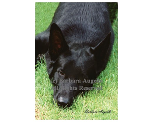 German Shepherd (Black) Flag
