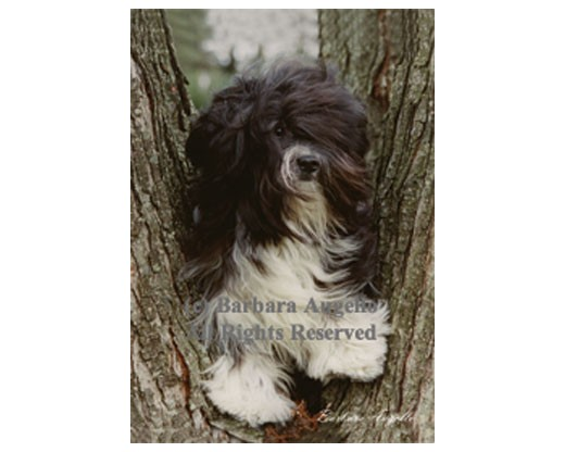 Havanese (Black/White) Flag