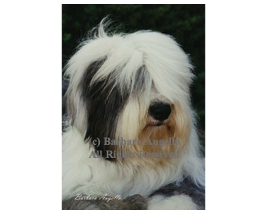 Old English Sheepdog Flag